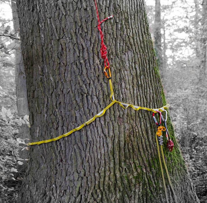 SupaSling am Baum